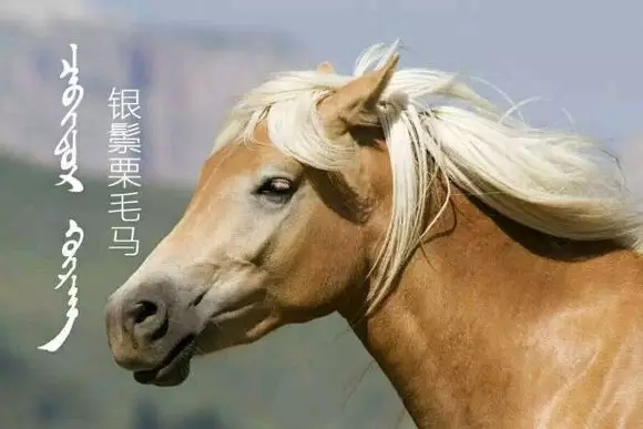 蒙古马的颜色名称 第5张