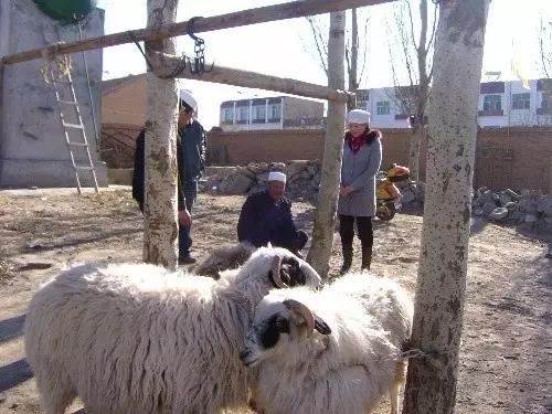 鲜为人知的蒙古族穆斯林的文化与融合 第12张