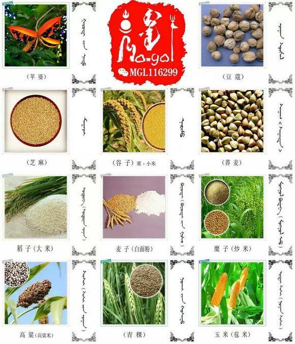 水果.蔬菜.粮食.食材的名称81种(蒙古文+汉语) 第5张