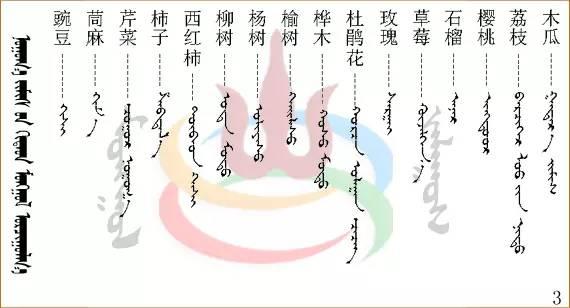 水果.蔬菜.粮食.食材的名称81种(蒙古文+汉语) 第10张