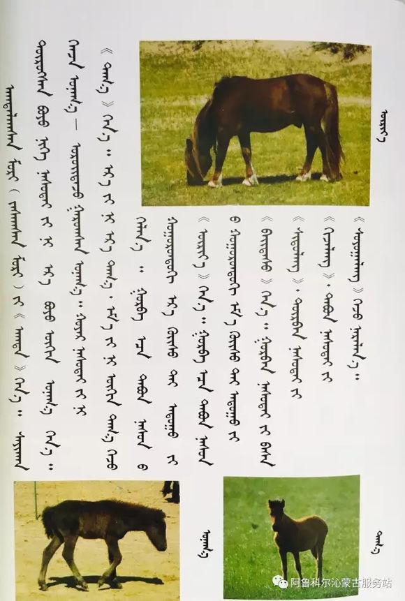 应知的蒙古五畜知识之----马(图文) 第1张