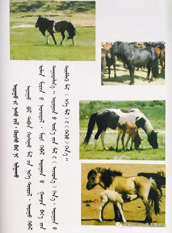 应知的蒙古五畜知识之----马(图文) 第2张