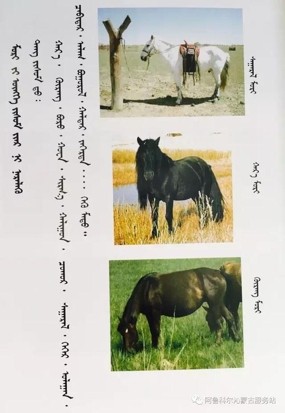 应知的蒙古五畜知识之----马(图文) 第9张