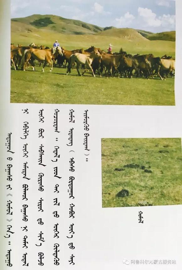 应知的蒙古五畜知识之----马(图文) 第8张