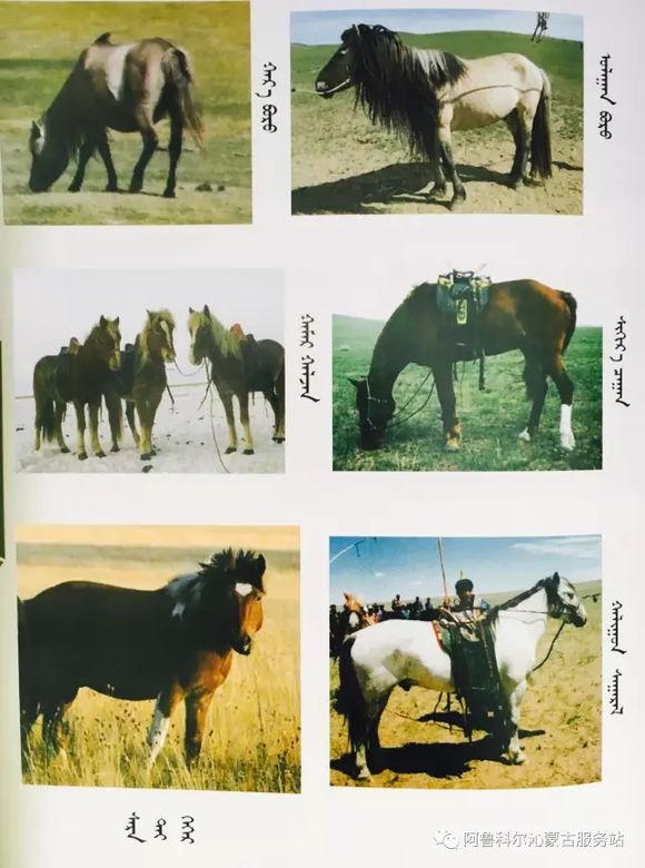 应知的蒙古五畜知识之----马(图文) 第13张