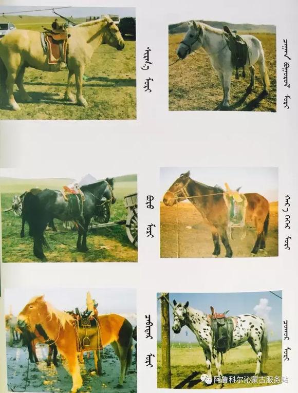 应知的蒙古五畜知识之----马(图文) 第11张