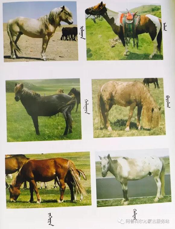 应知的蒙古五畜知识之----马(图文) 第12张