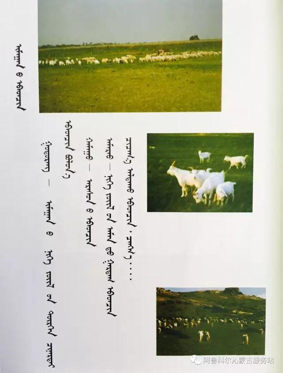 应知的蒙古五畜知识--山羊(图文) 第8张