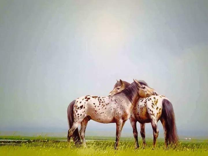 画家笔下的蒙古骏马,栩栩如生 仿佛要从画里跑出来 ... 第4张