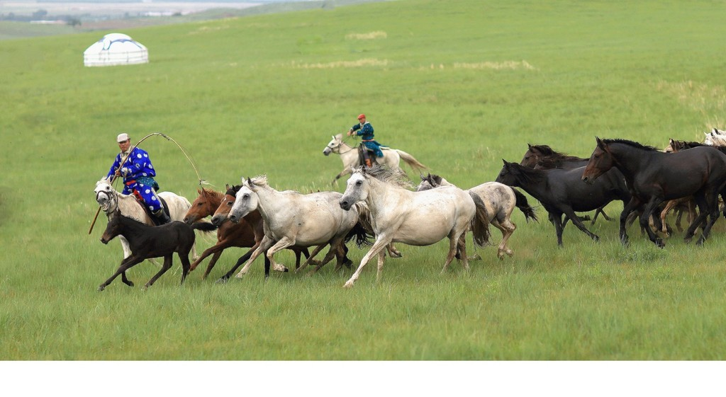有关套马的摄影图1 第1张