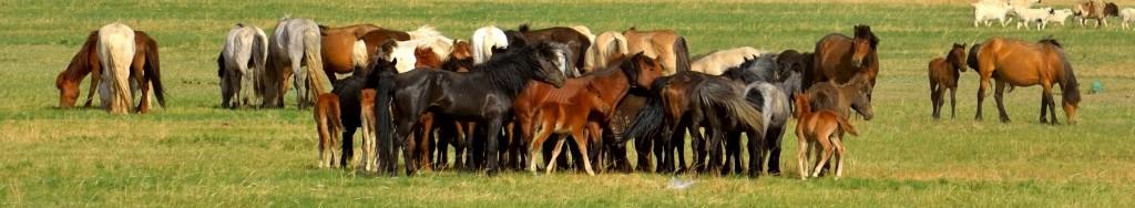 有关套马的摄影图1 第5张
