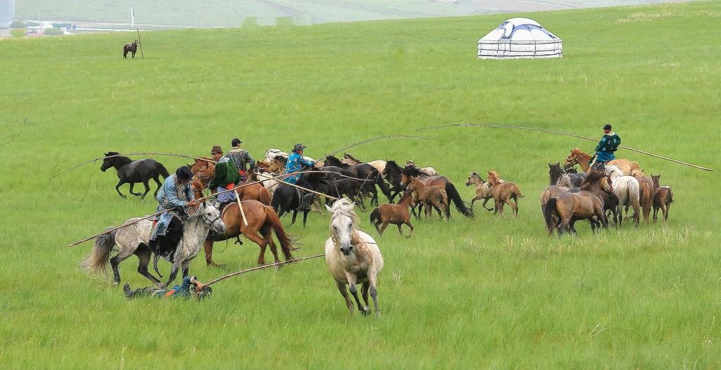 有关套马的摄影图1 第2张
