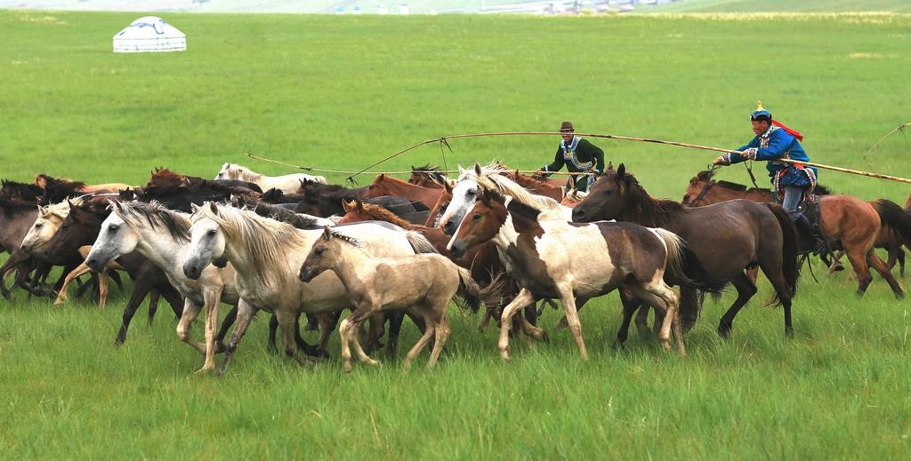 有关套马的摄影图1 第9张