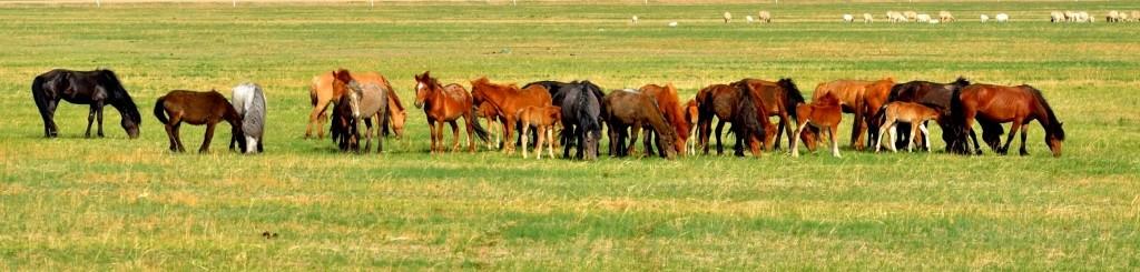 有关套马的摄影图1 第12张