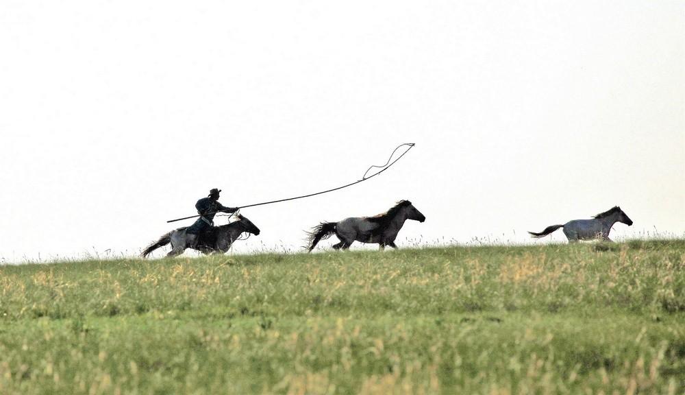 有关套马的摄影图1 第15张