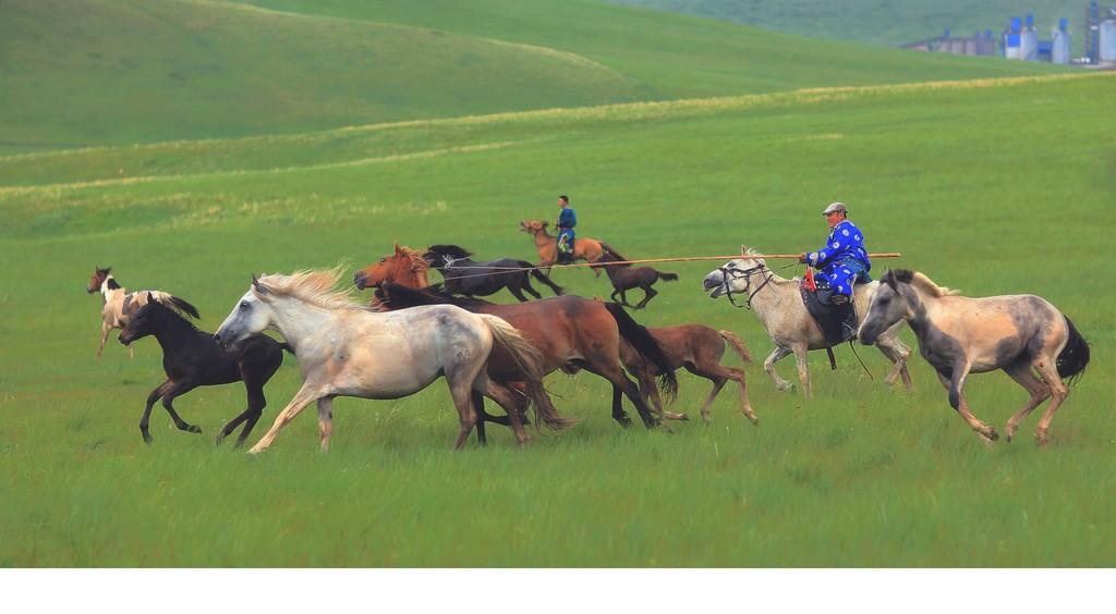 有关套马的摄影图2 第2张