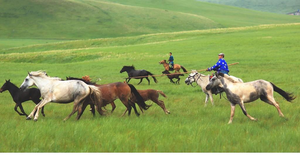 有关套马的摄影图2 第3张