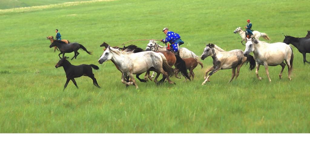 有关套马的摄影图2 第1张