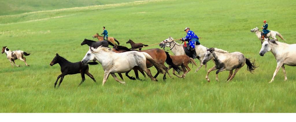 有关套马的摄影图2 第5张