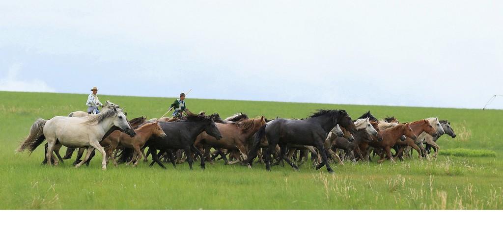 有关套马的摄影图2 第6张