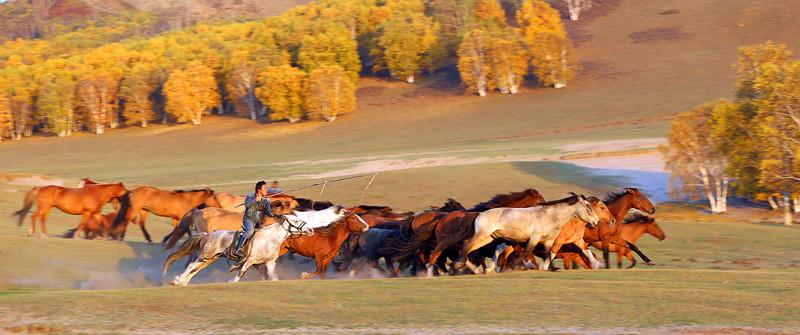 有关套马的摄影图2 第10张