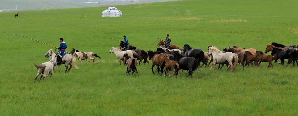 有关套马的摄影图3 第7张