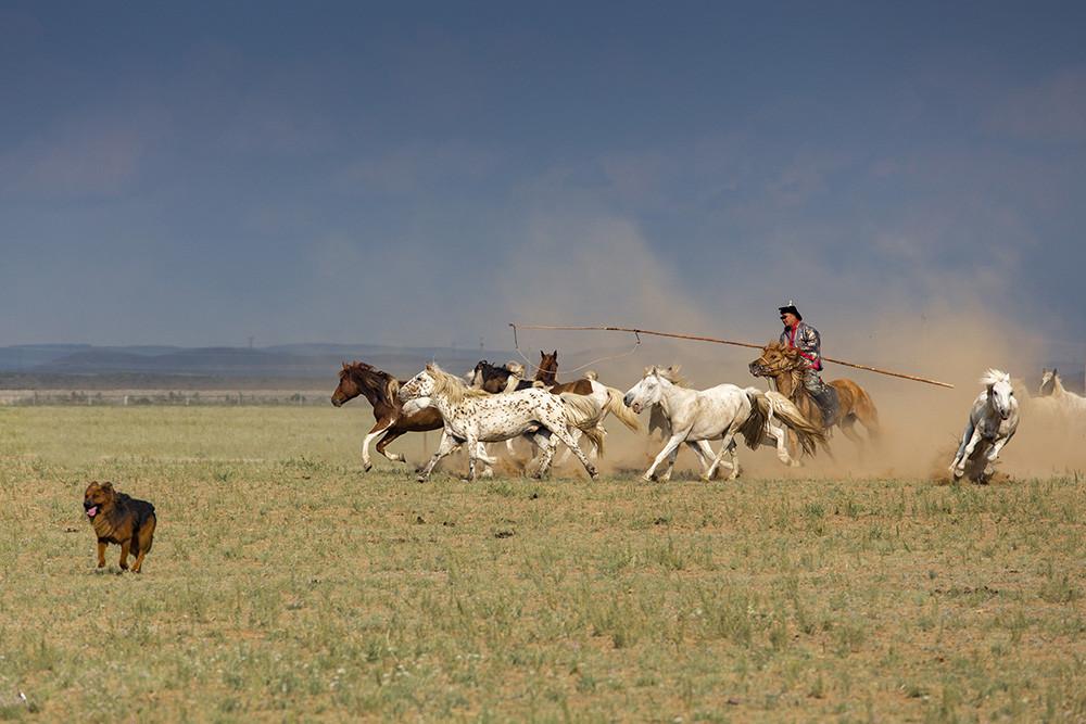 有关套马的摄影图3 第20张