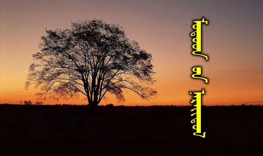 54种树木的名字,双语解释(蒙古文 汉语) 第1张