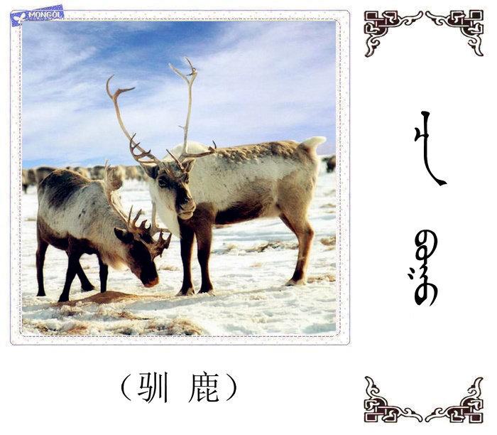 哺乳动物的名字(蒙古文 汉语) 第2张