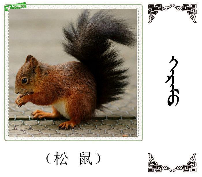 哺乳动物的名字(蒙古文 汉语) 第4张