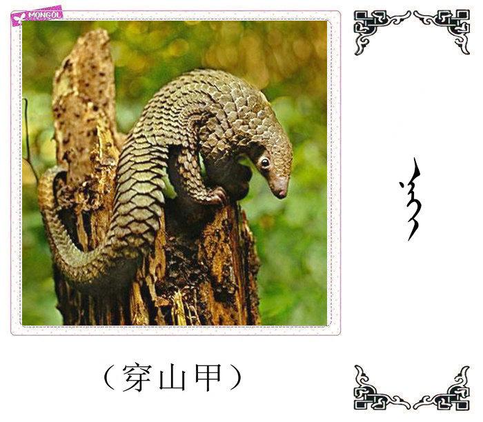 哺乳动物的名字(蒙古文 汉语) 第8张