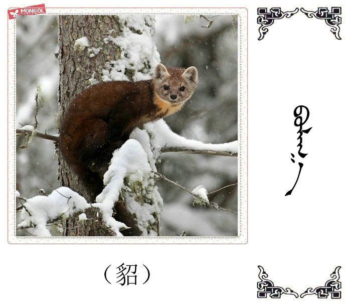 哺乳动物的名字(蒙古文 汉语) 第7张