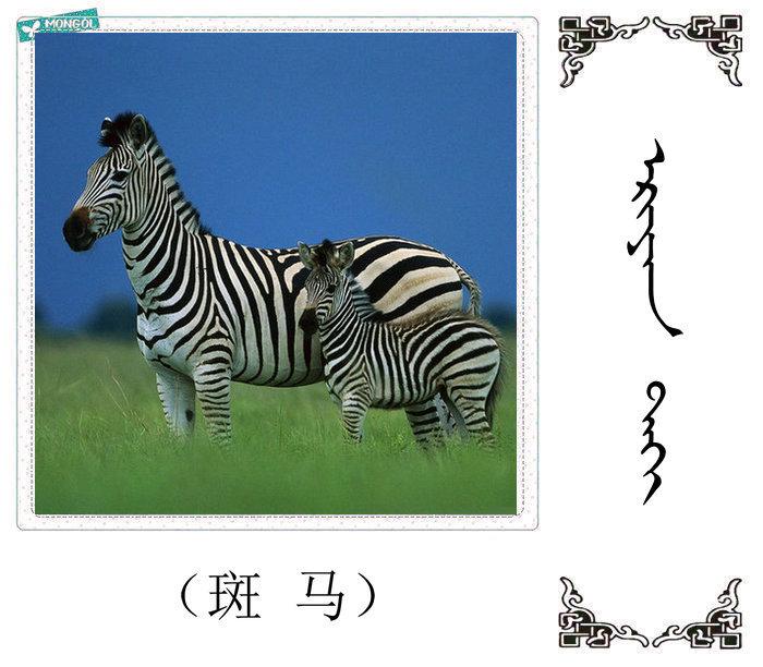 哺乳动物的名字(蒙古文 汉语) 第10张