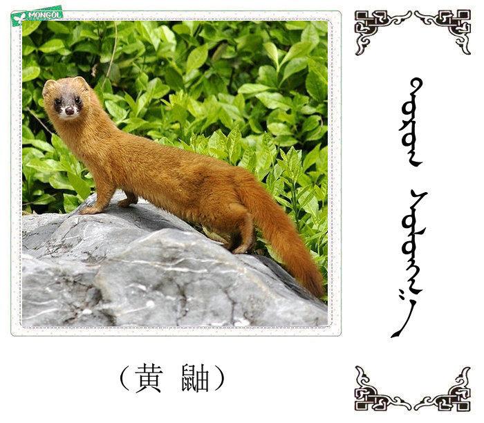 哺乳动物的名字(蒙古文 汉语) 第12张