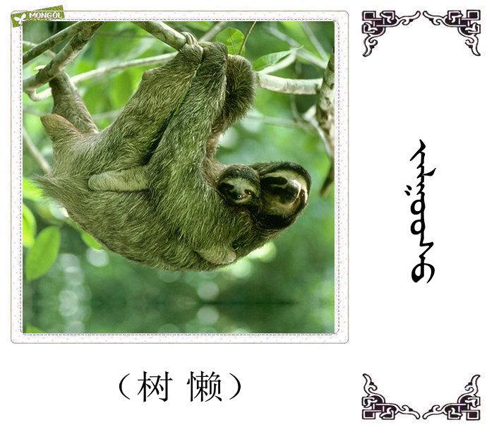 哺乳动物的名字(蒙古文 汉语) 第13张
