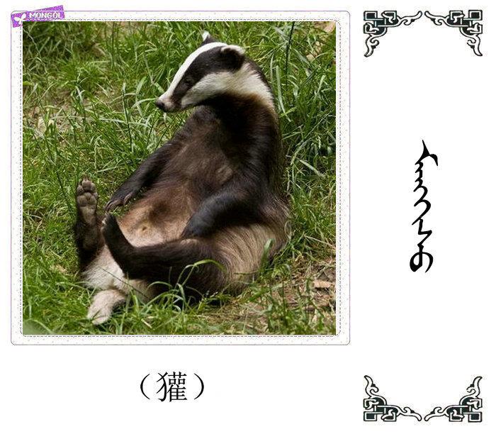 哺乳动物的名字(蒙古文 汉语) 第16张