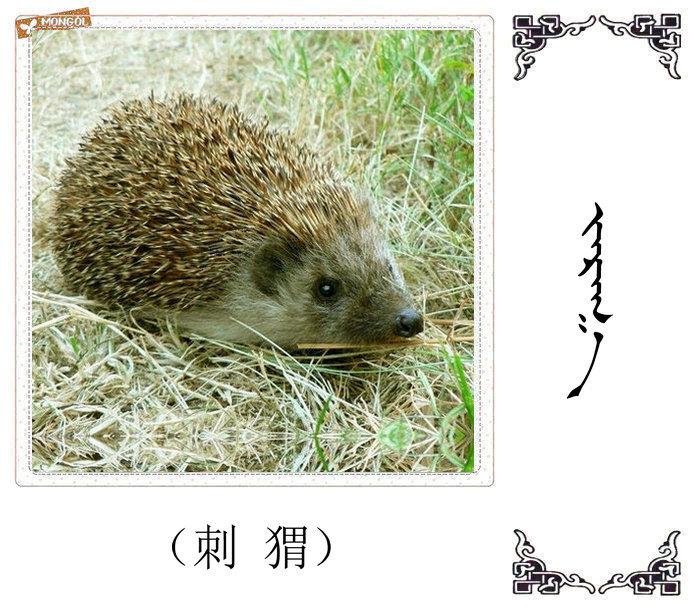 哺乳动物的名字(蒙古文 汉语) 第14张