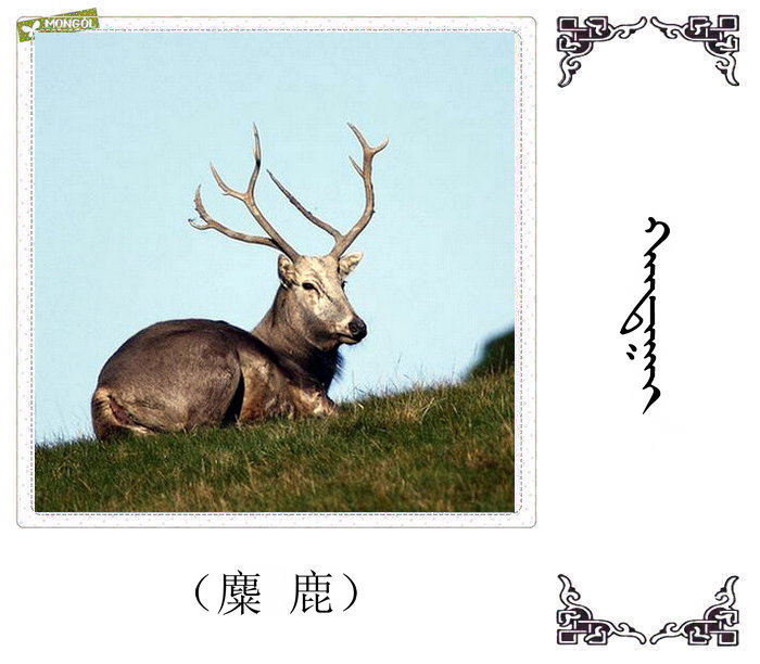 哺乳动物的名字(蒙古文 汉语) 第19张