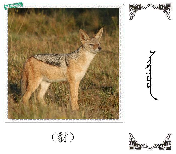 哺乳动物的名字(蒙古文 汉语) 第18张
