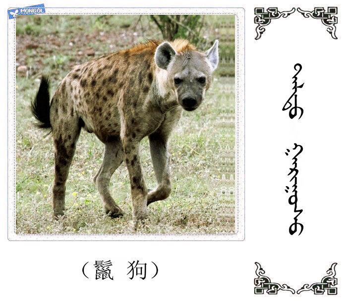 哺乳动物的名字(蒙古文 汉语) 第17张
