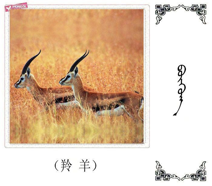 哺乳动物的名字(蒙古文 汉语) 第21张