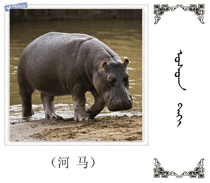 哺乳动物的名字(蒙古文 汉语) 第23张