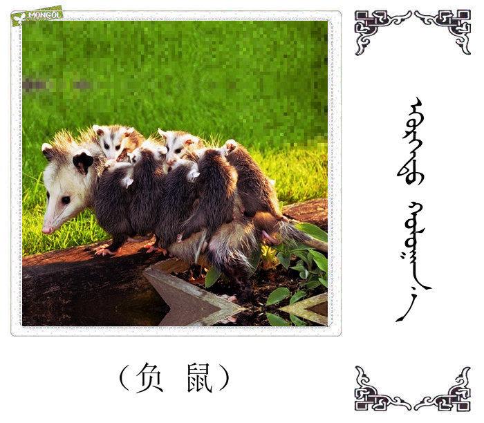 哺乳动物的名字(蒙古文 汉语) 第25张