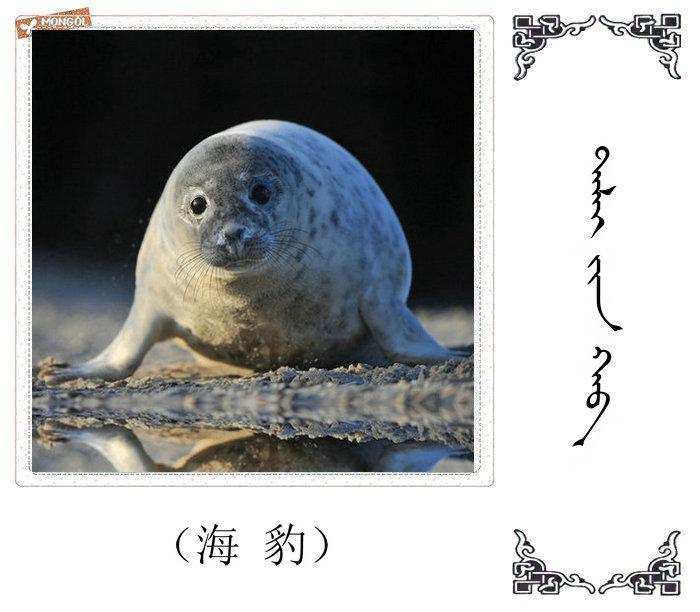 哺乳动物的名字(蒙古文 汉语) 第26张