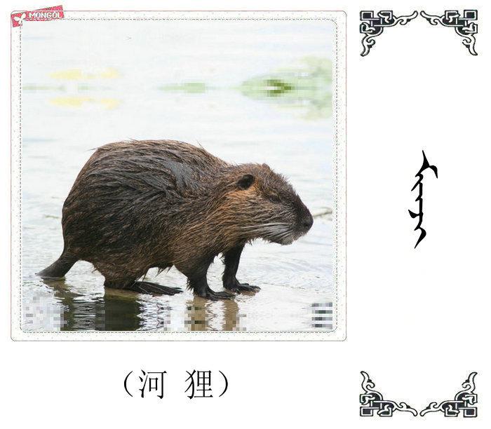 哺乳动物的名字(蒙古文 汉语) 第27张