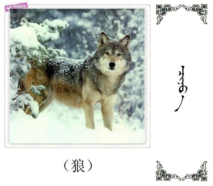 哺乳动物的名字(蒙古文 汉语) 第28张