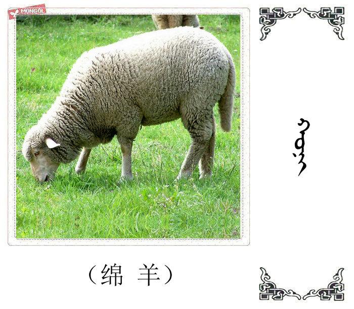 哺乳动物的名字(蒙古文 汉语) 第31张