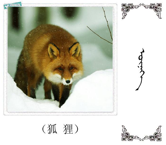 哺乳动物的名字(蒙古文 汉语) 第34张