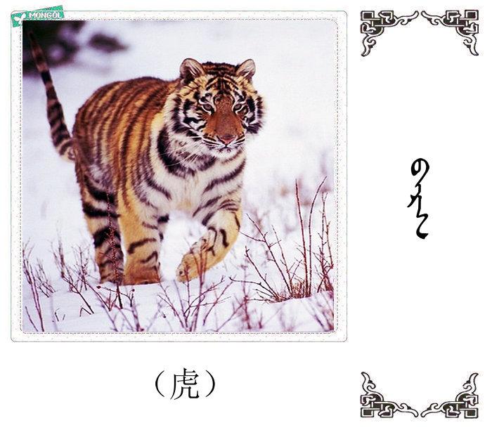 哺乳动物的名字(蒙古文 汉语) 第30张