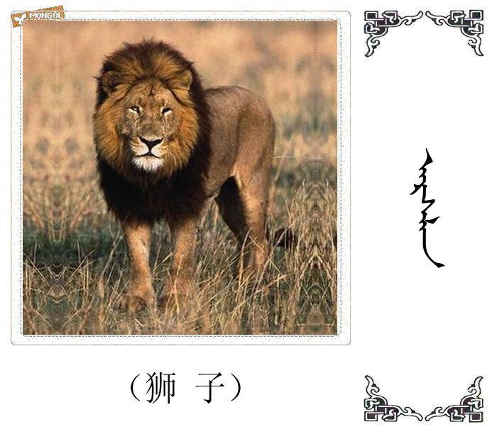哺乳动物的名字(蒙古文 汉语) 第32张